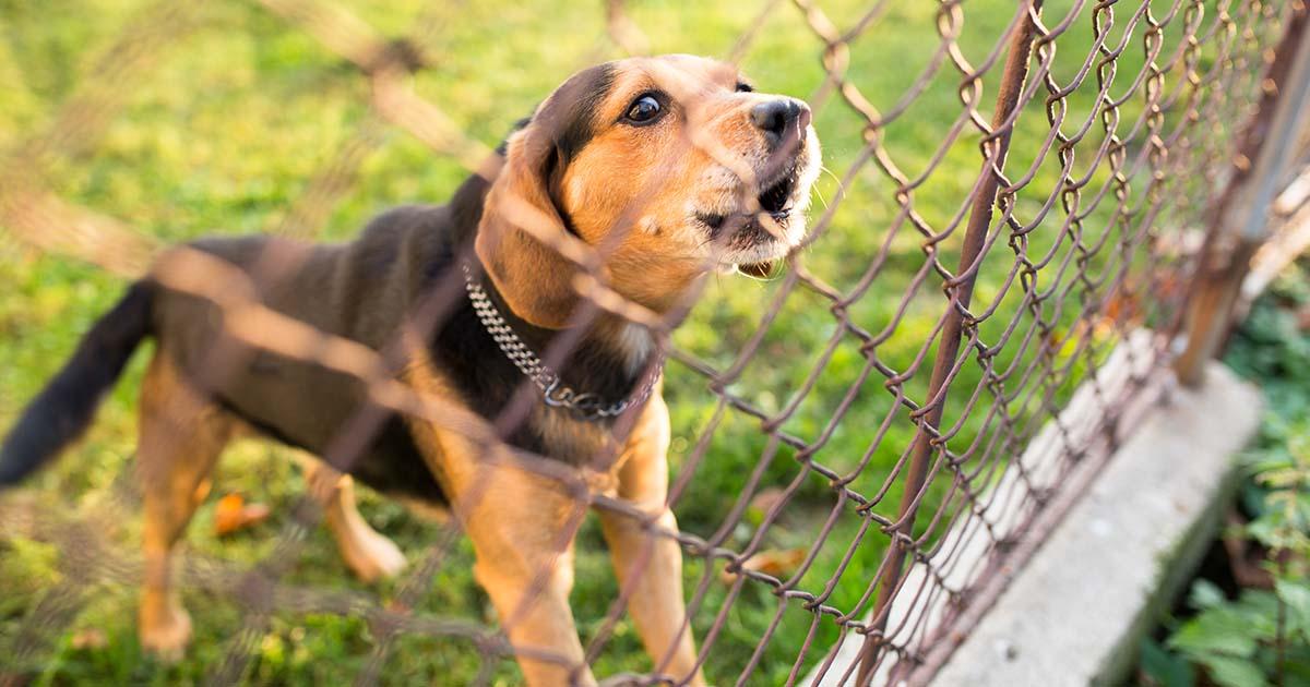 dog barking behind fence